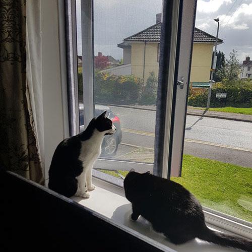 cat proof mesh window screens